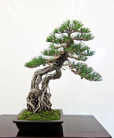 A wonderful story about bonsai and life!