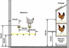 схема курятника на 10 кур: 12 тыс изображений найдено в Яндекс.Картинках