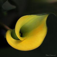 Yellow by Fabrizio  Riccardo Castorina on 500px