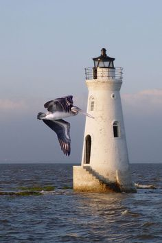 Pelican flying past Cockspur #Lighthouse http://hardsadness.tumblr.com/post/124066009176   ..rh