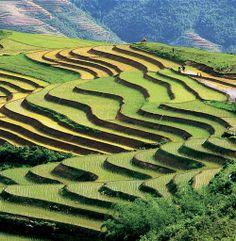 Riziere en terraces a Sapa, Vietnam