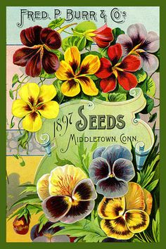 Olde America Antiques | Quilt Blocks | National Parks | Bozeman Montana : Flowers - Fred Burr Seeds 1897