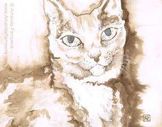 Cat Fine Art Print Dapheny Gazing Sweetly by AnimalsbyAmanda