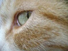 Olhar felino 2