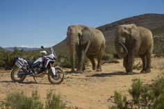 Africa Twin with elephants!