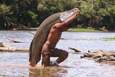 The Arapaima-largest freshwater fish in GUYANA. That's a big fish. Fish Face, Fishing World, Amazon River, Thinking Day, Big Fish, Giant Fish, Freshwater Fish, Fishing Lures, South America