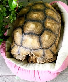 Turtle town likes having soft bed to sleep in LOL!