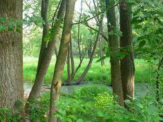 Woodman Fen.  Wetland, neighborhood park.  Part of Five Rivers MetroPark.