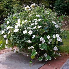White garden on pinterest white gardens moon garden and for Moon garden designs