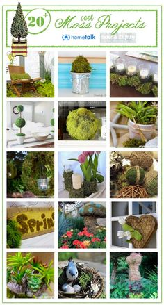 Love all these moss project ideas! #moss