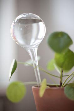 Vihreä talo - sisustusblogi: Sinulle joka et muista kastella kasveja