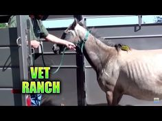 Heroes Rescue Pregnant Horse From Auction And Slaughter | Animals and Nature