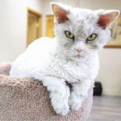 Albert cats