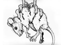 Rat Sketch - The Art of Damasso Sanchez
