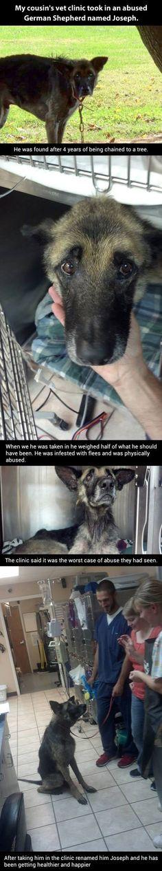 Amazing dog recovery…
