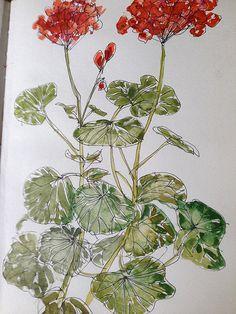 Geranium by Mary Hartley