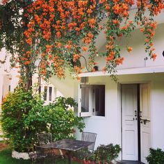 Waking Up To Sheer Bliss Amidst The Overhanging Secret Gardens Of Jobner Bagh ..... A Haven Tucked Away From Jaipur Craziness