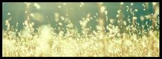 Fields of gold, Facebook cover photo