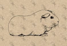 Vintage retro drawing image Guinea Pig picture Instant Download printable clipart digital graphic fabric transfer, t-shirts, bags HQ300dpi