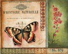 VD14-8 Papillon.jpg