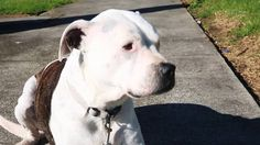 Buster gets his dog registration papers | Auckland Council