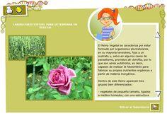 Determinar un vegetal. Biología y Geología para 3º ciclo de Primaria - Didactalia: material educativo