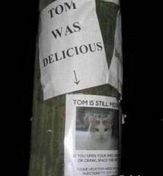 to all the cat owners viewing this: I didn't really laugh at this but that would be...wrong