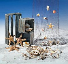Shells are ideal for a maritime summer decoration. With a fishing net, for decorating, collecting or giving away – there are no limits to the wide range of possible uses. Spring Window Display, Shop Window Displays, Summer Decoration, Sailor Theme, Decoration Vitrine, Nautical Wedding Theme, Sea Theme, Beach Themes, Retail Design