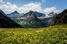 Glacier National Park | Glacier Lilies | © Jay Moore Photography