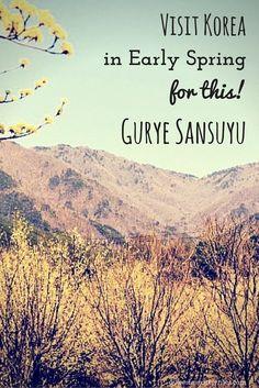 Gurye Sansuyu South Korea