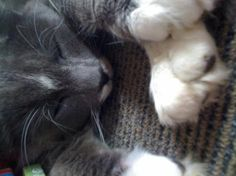Cutest Cat Photo Competition - GottaPet - Vote for my kitty :)
