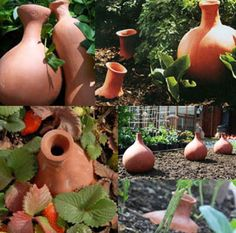 Olla Watering Irrigation: You burry these terra cotta containers in your soil up to the mouth of the vessel. Add water inside and they slowly release it by wicking through the earthenware, keeping soil consistently damp, all while saving water-loss from evaporation.