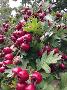 Herfst in Amstelveen