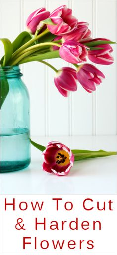 How To Cut & Harden Flowers