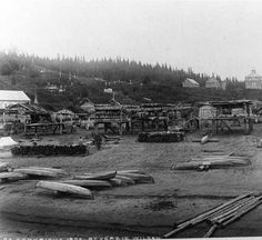 Athapascan canoes & fish racks on beach near Russian mission, Kotlik, Alaska, 1895
