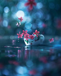 I Create Magical Images With My Old Lantern Flower Background Wallpaper, Flower Phone Wallpaper, Butterfly Wallpaper, Cute Wallpaper Backgrounds, Flower Backgrounds, Phone Backgrounds, Beautiful Flowers Wallpapers, Beautiful Nature Wallpaper, Pretty Wallpapers