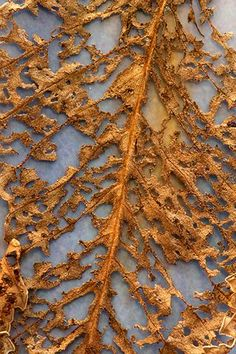 Leaf Abstract Byron Jorjorian