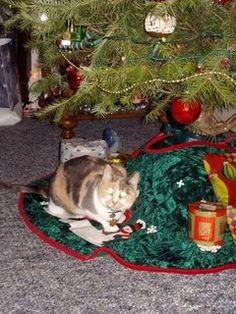 Callie under the Xmas tree