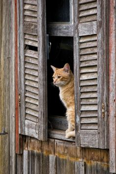 Cat at the window by Bruno Leonardelli @flickr