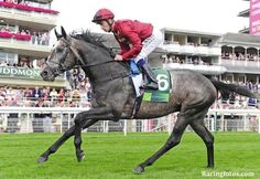 Royal Lodge, Horse Racing, Race Horses, Roaring Lion, Colic, Racing News, Second World, Horse Breeds