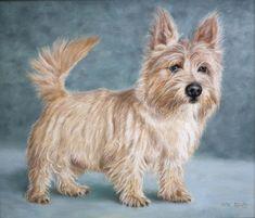 Norwich Terrier dog portrait 1 - oils on canvas