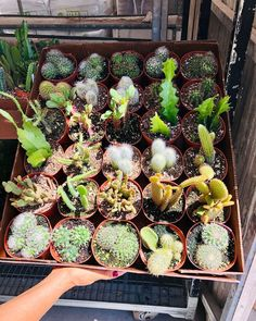 """""""Count them while you can..."""" -Anne Bowmen Drying Flowers, Cut Flowers, Garden Plants, House Plants, Natural Ecosystem, Cut Flower Garden, Pressed Flower Art, Vertical Gardens, How To Preserve Flowers"""