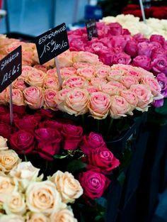 Rosas em tons diferentes.