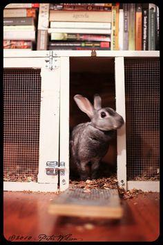 Trailer, Rabbit, Pet