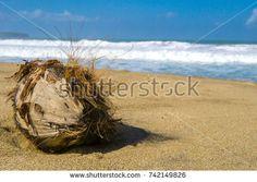 https://www.shutterstock.com/image-photo/old-rusty-coconut-beach-742149826?src=MDc6WB28dIsUXne3mWdJJA-1-1