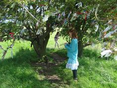 The Wishing Fairy Tree at the Hill of Tara! Bring some ribbon to tie on the branches and make a wish to the fairies