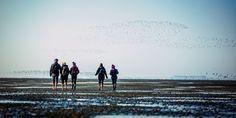 Para chegar a três das ilhas Halligen, Testemunhas de Jeová caminham no leito do Mar do Norte