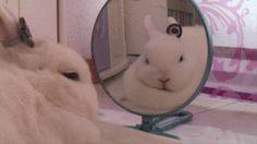 Cute white rabbits
