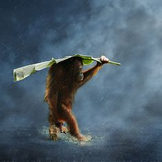 Orangutan Improvised Umbrella by 3 Joko When the Rain