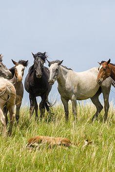 Was Pferden den Schlaf raubt bei Pferd und Reiter. Ohne ausreichend Schlaf bleibt das Pferd nicht gesund und kann keine Leistung bringen: Störfaktoren gibt es viele. Insbesondere ein mangelndes Sicherheitsgefühl bringt Pferde um den Schlaf.